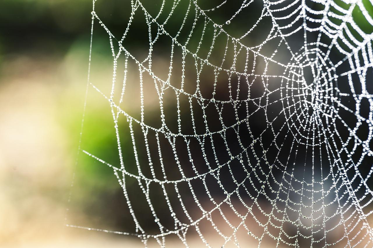 spider-silk-1287407_1280